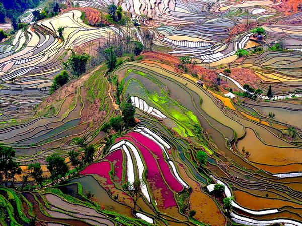 China Terraced Rice Field Aerial Photo