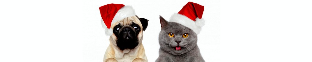 santa dog and cat