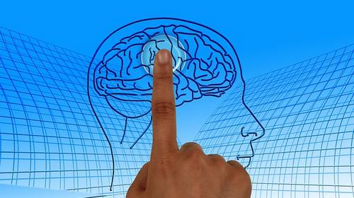 Brain area identified with finger