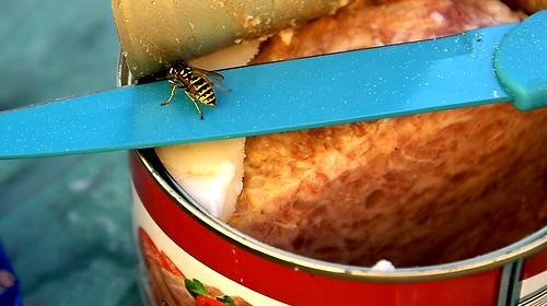 canned meat and bee