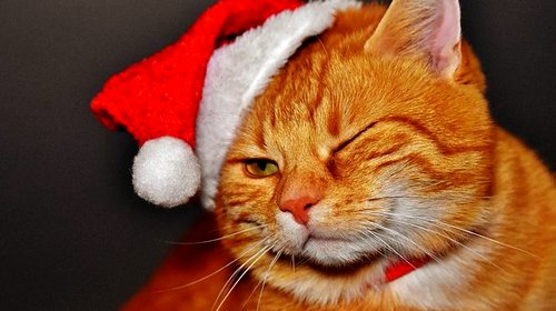 santa hat orange tabby cat