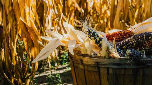 corn husks in a basket for toilitry needs