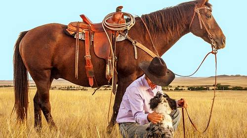 horse dog cowboy in wheat field