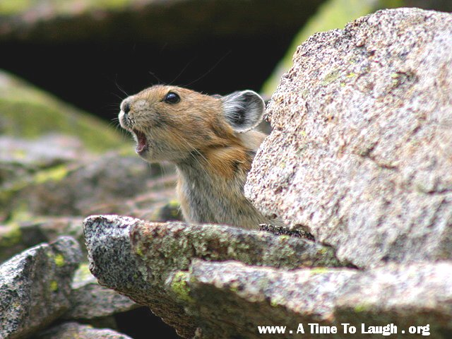 squirrel critter pic