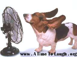 hound dog with ears blowing in a fan
