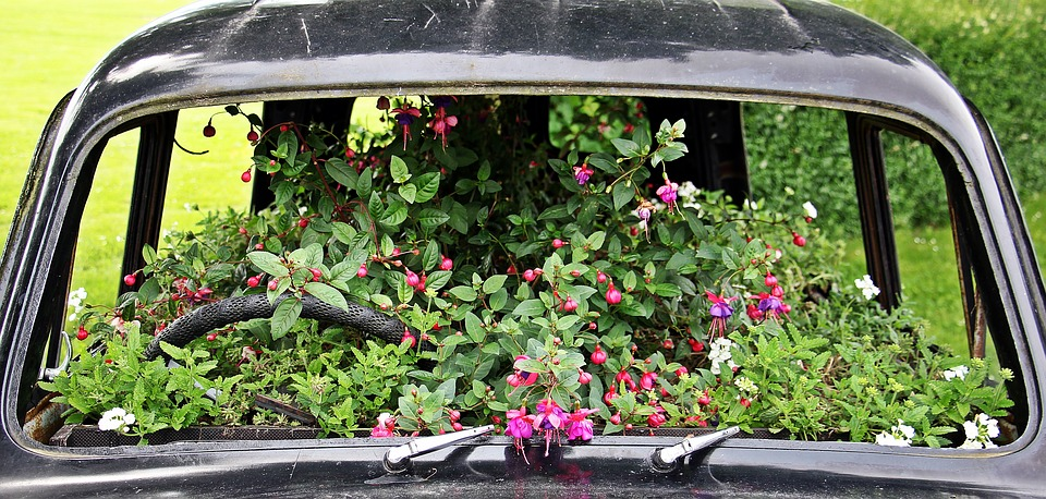 beautiful flowers growing in an old car