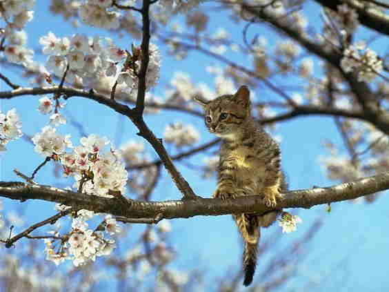 kitty sitting in flowering tree