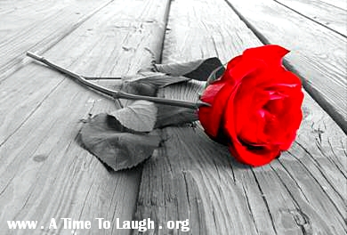 red rose on wood deck