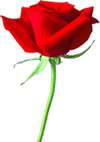 single red rose with green stem
