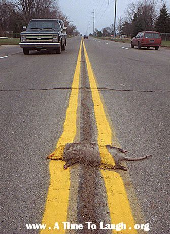 road kill painted in the median