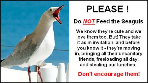 dont feed the seagulls funny sign
