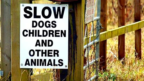 slow dogs and children sign