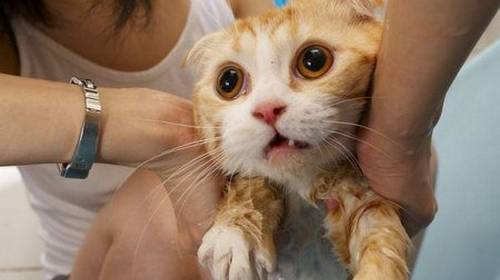 alien wet kitty cat yellow tabby